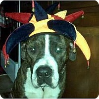 Adopt A Pet :: Hugo aka Hemi - Brewster, NY
