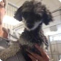 Adopt A Pet :: Kona - Shawnee Mission, KS
