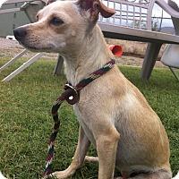 Adopt A Pet :: Bianca - Alamogordo, NM