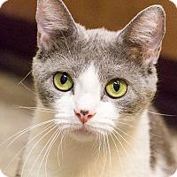 Adopt A Pet :: Larkspur - Chicago, IL
