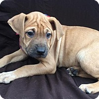 Adopt A Pet :: Gina - East Sparta, OH
