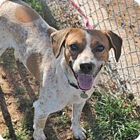 Adopt A Pet :: Gunther - Nanuet, NY