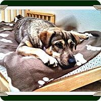 Adopt A Pet :: Ella - West Los Angeles, CA