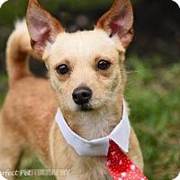 Adopt A Pet :: Elih - Miami, FL
