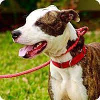 Adopt A Pet :: Obi Wan - Vancouver, BC