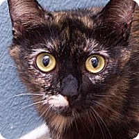 Adopt A Pet :: Gracie - Irvine, CA