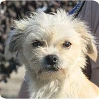 Adopt A Pet :: Mavis - Seattle, WA