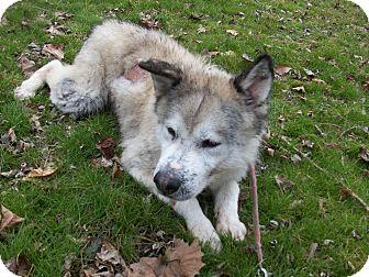 Alaskan Malamute Mix Dog for adoption in Augusta County, Virginia - Balto