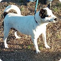 Adopt A Pet :: Holly - Carthage, NC