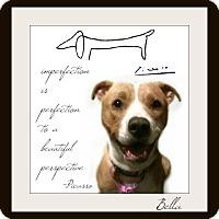 Adopt A Pet :: Bella-adoption pending - Des Moines, IA