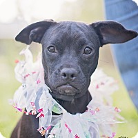 Adopt A Pet :: Betty - Kingwood, TX