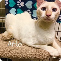 Adopt A Pet :: Arlo - Foothill Ranch, CA