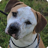 Adopt A Pet :: BUCKO:Low fees/neutered - Red Bluff, CA