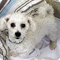 Adopt A Pet :: Jigs - Ann Arbor, MI