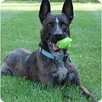 Adopt A Pet :: Trey - Rochester/Buffalo, NY
