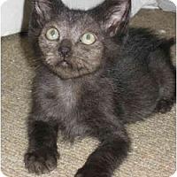 Adopt A Pet :: Lionel - Davis, CA
