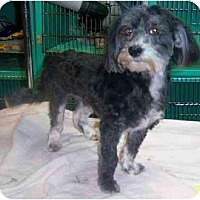 Adopt A Pet :: SHILOH - Rossford, OH