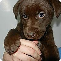 Adopt A Pet :: John - South Jersey, NJ