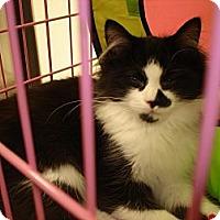 Adopt A Pet :: Zipper & Bows - Chesapeake, VA