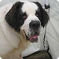 Adopt A Pet :: FRED 3 - ADOPTION PENDING - Sudbury, MA
