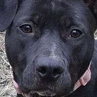 Adopt A Pet :: Meka - Livonia, MI
