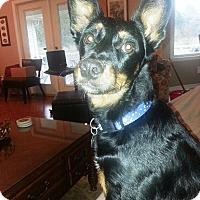 Adopt A Pet :: Torrie - Marietta, GA