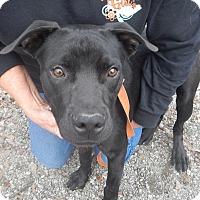 Adopt A Pet :: Partick - Charleston, AR