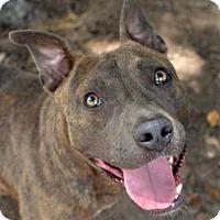 Adopt A Pet :: Miracle - Ridgeland, SC