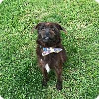 Adopt A Pet :: Iggy - Los Angeles, CA