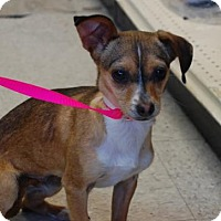 Adopt A Pet :: Beatrice - Brooklyn, NY