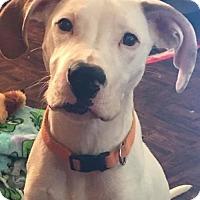 Adopt A Pet :: Hercules - Ashland, KY