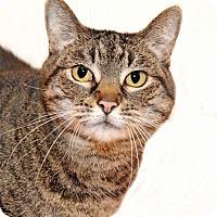 Adopt A Pet :: Marcy - Encinitas, CA