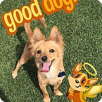 Adopt A Pet :: Fernando - Las Vegas, NV