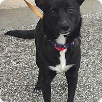Adopt A Pet :: Toto - Cincinnati, OH