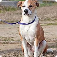 Adopt A Pet :: Jennie - Scotland Neck, NC