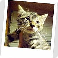 Adopt A Pet :: Chance - Owosso, MI