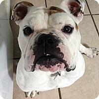 Adopt A Pet :: Louie - Strongsville, OH