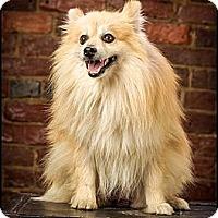 Adopt A Pet :: Owen - Owensboro, KY
