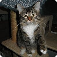 Adopt A Pet :: Zoozie - Milwaukee, WI