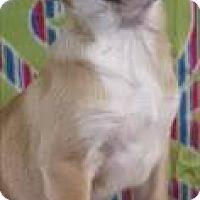 Adopt A Pet :: Bernadette - Hamburg, PA