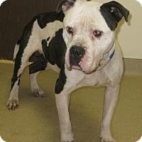 Adopt A Pet :: King - Gary, IN
