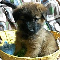 Adopt A Pet :: Pork Chop - East Hartford, CT