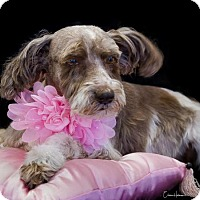 Adopt A Pet :: Portia - Phelan, CA