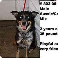 Adopt A Pet :: # 802-09 @ Animal Shelter - Zanesville, OH