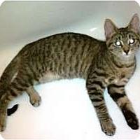 Adopt A Pet :: Daisy - San Ramon, CA