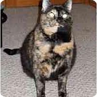 Adopt A Pet :: Krista - Milwaukee, WI
