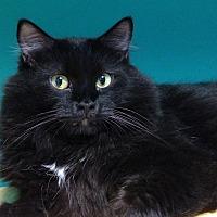 Adopt A Pet :: Arthur - Topeka, KS