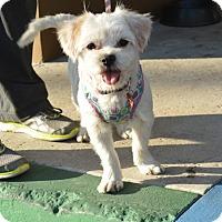 Adopt A Pet :: EMMA - Redondo Beach, CA