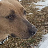 Adopt A Pet :: Ms. Blue - New Richmond,, WI