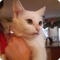 Adopt A Pet :: Zima - Mesa, AZ